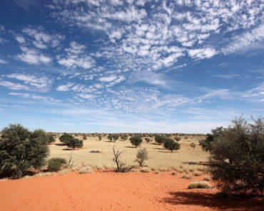 50 цікавих фактів про пустелю Калахарі