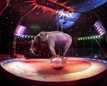 36 цікавих фактів про цирк і циркових
