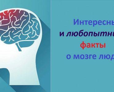 50 цікавих фактів про мозок людини