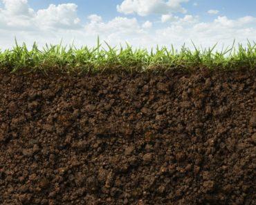 50 цікавих фактів про ґрунт