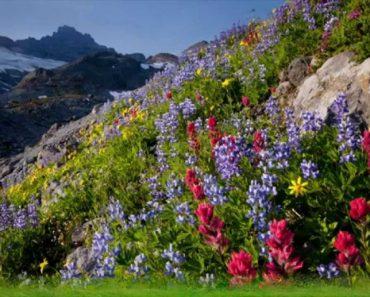 45 цікавих фактів про гірські рослини