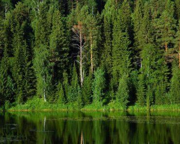 50 цікавих фактів про ліси і дерева нашої планети
