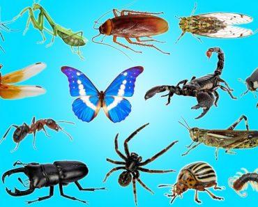 50 цікавих фактів про комах для допитливих