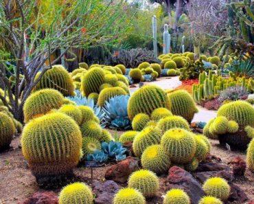 50 найцікавіших фактів про кактуси