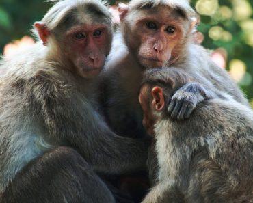 50 цікавих фактів про мавпочок