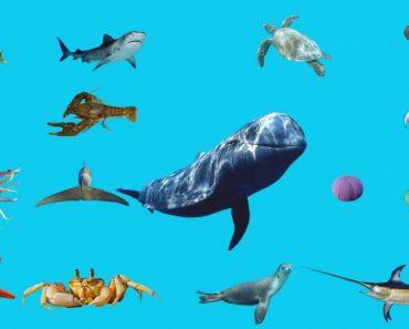 50 цікавих фактів про морських мешканців