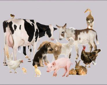 50 цікавих фактів про домашніх тварин