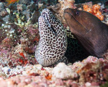 35 цікавих фактів про риби мурени