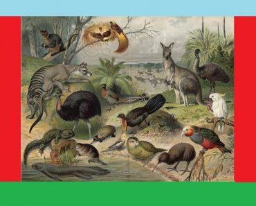 50 цікавих фактів про тварин Нової Зеландії