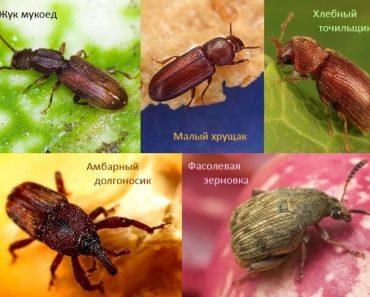50 цікавих фактів про жуків для допитливих