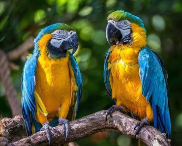 50 найцікавіших фактів про папуг