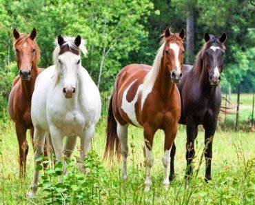 30 цікавих фактів про коней