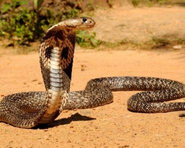 50 цікавих фактів про змій для допитливих