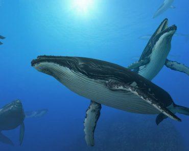 50 цікавих фактів про китів