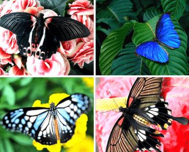 50 найцікавіших фактів про метеликів