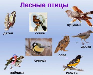 50 цікавих фактів про різних птахів