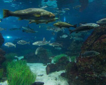 50 найбільш цікавих фактів про риб