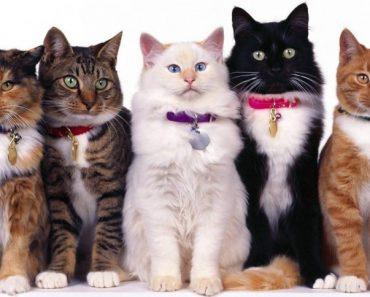 40 цікавих фактів про лікувальні властивості кішок