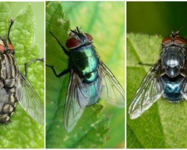 65 цікавих фактів про мух