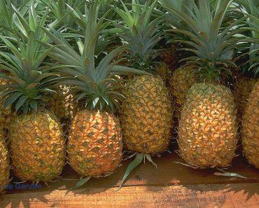 50 найбільш цікавих і дивовижних фактів про ананаси