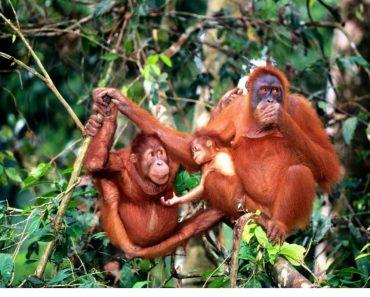 50 цікавих фактів про мавп