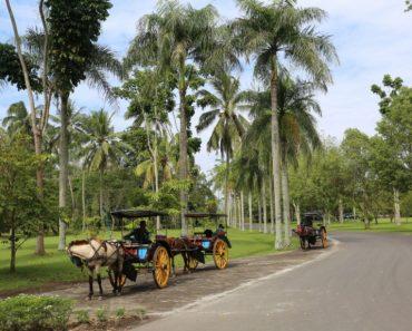 80 цікавих фактів про острів Ява