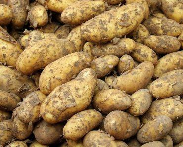 25 цікавих фактів про картоплю