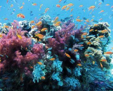 25 цікавих фактів про корали