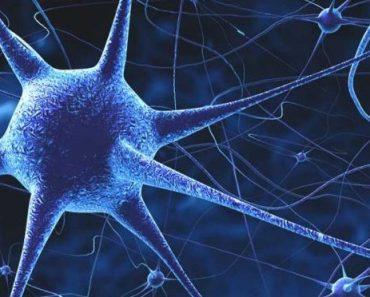 Цікаві факти про нервову систему
