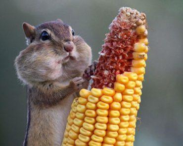 Цікаві факти про харчування тварин