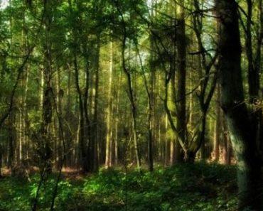 Цікаві факти про рослини лісових зон