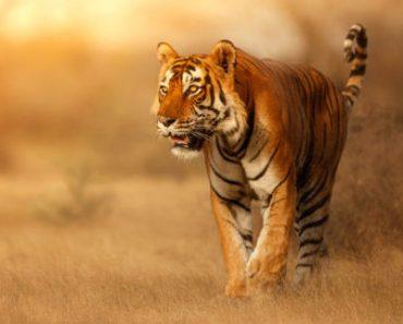Цікаві факти про диких тварин