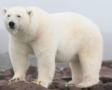 Цікаві факти про Арктичний заповідник