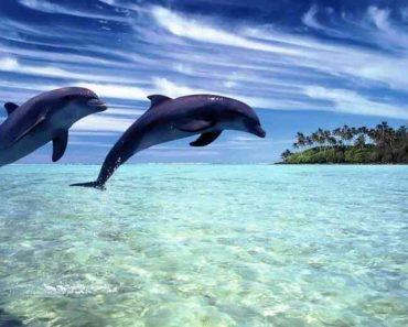 50 цікавих фактів про дельфінів