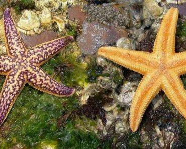 35 цікавих фактів про морських зірок