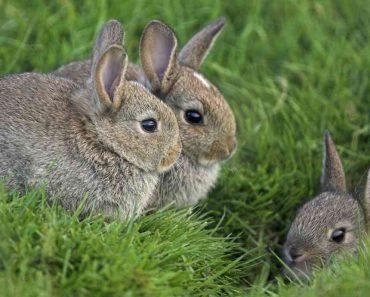 50 цікавих фактів про зайців