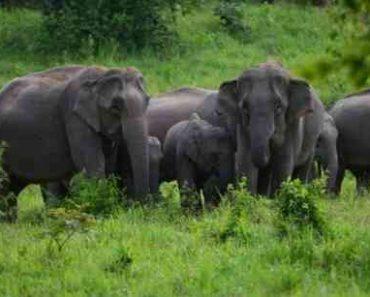 40 цікавих фактів про слонів