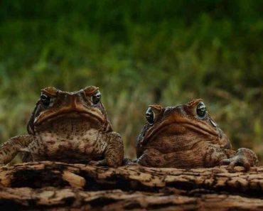 50 цікавих фактів про жаби